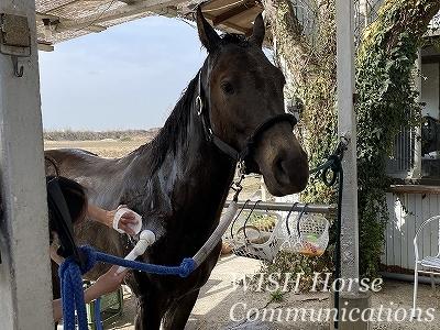 馬の気持ちを考える乗馬
