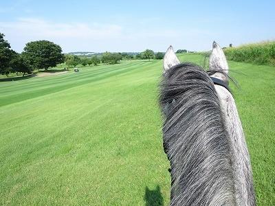 馬といっぱい触れ合える