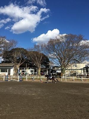 春を感じる乗馬