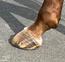 馬の買い方選び方