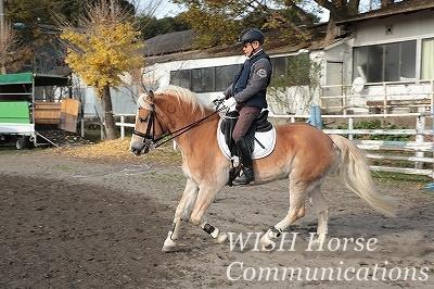 軽い馬重い馬