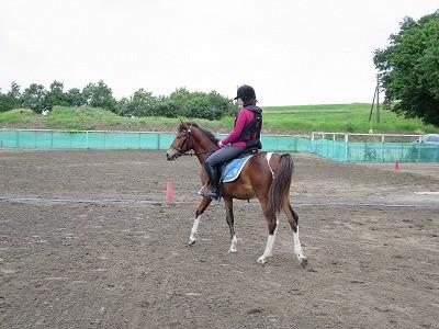 新馬調教 馬の気持ちを考える