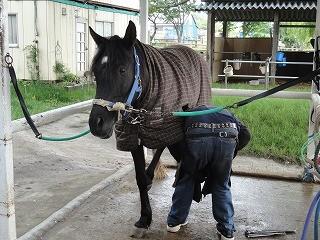 蹄鉄あっての馬です♪