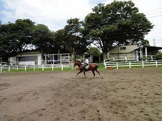 乗馬の楽しみは人馬の健康から