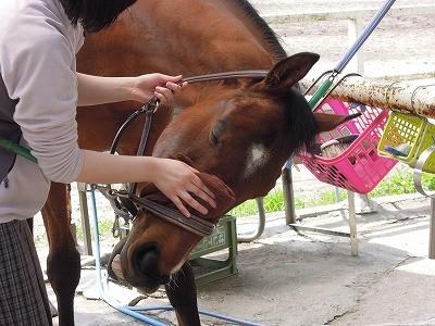 馬が喜ぶ手入れ