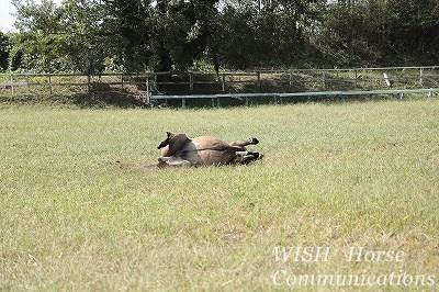 気持ち良さそうに伸びをする馬
