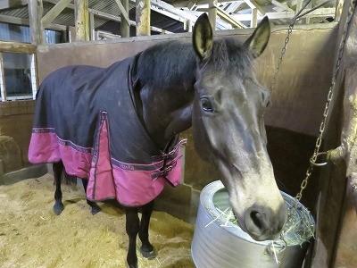 馬のホッとした表情