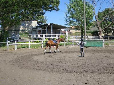 馬と話すにはボディーランゲージを使う