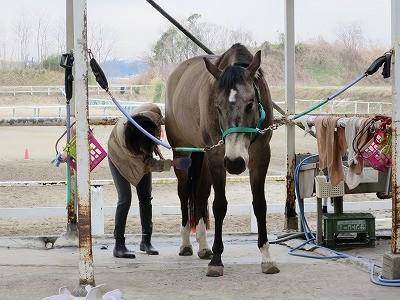 気持ちいい馬の手入れ