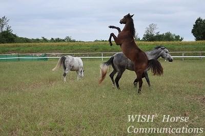 元気いっぱい遊ぶ馬