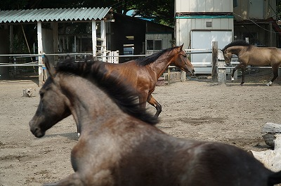 馬場も障害飛越も馬の自然な動きで