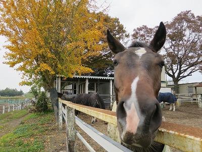 晩秋の馬達