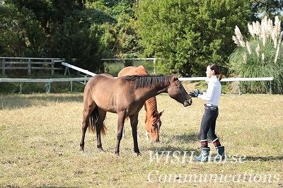 馬に優しくする乗馬