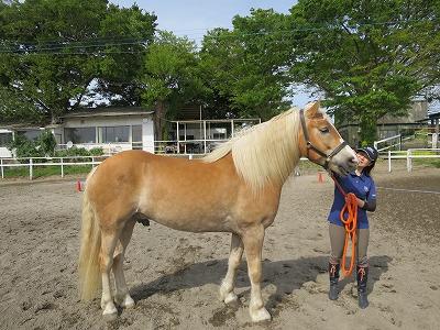 春の乗馬クラブの選び方