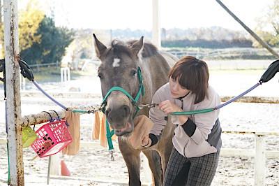 馬が可愛い理由