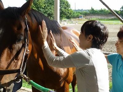 馬の手触り