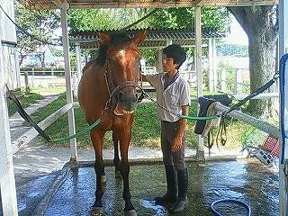 気持ちいい時の馬の表情