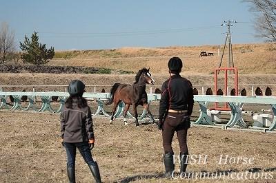 馬が健康で元気!