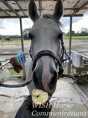 乗馬とリンゴ