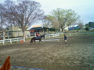 乗馬レッスン風景と柳