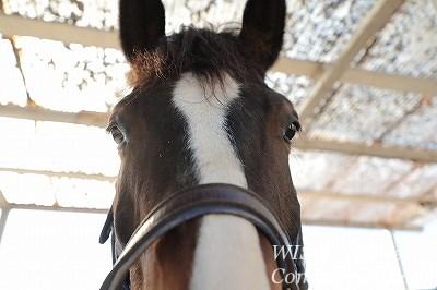 性格の良い馬たち