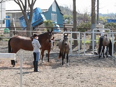 馬と一緒に放牧