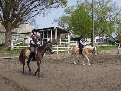 乗馬の加減力