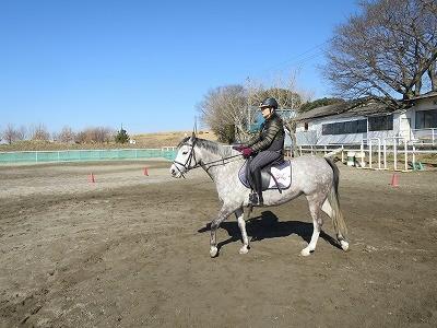 乗馬は馬の理解と協力が必要