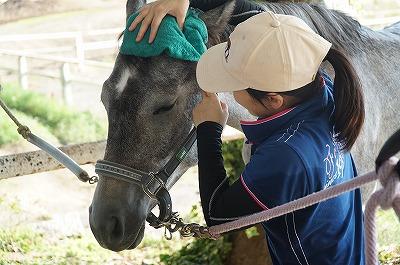 馬と親睦を深める