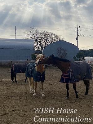 楽しそうに遊ぶ乗馬
