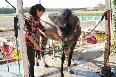 馬のボディランゲージ実例