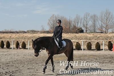 馬と心を寄り添う乗馬