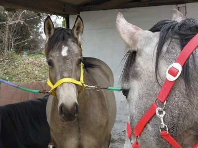 馬のアイコンタクト