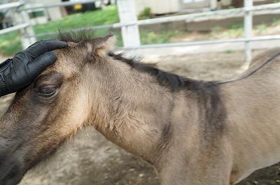 大切なのは馬との会話がかみ合っているかの判断
