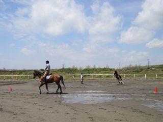 快晴の乗馬クラブ
