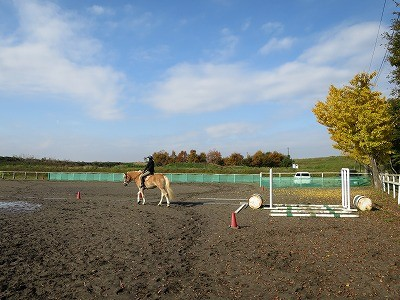 乗馬と落ち葉のじゅうたん