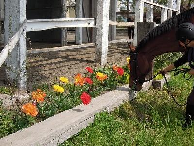 馬と仲良く