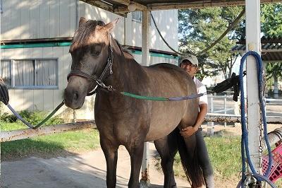 良く育てられた馬と戯れる