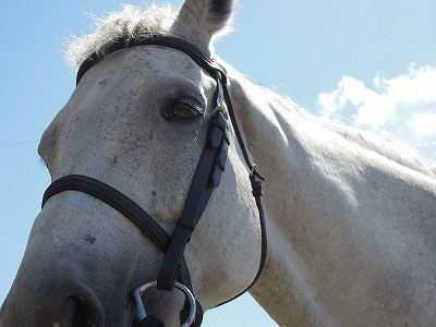 ウィッシュの馬は表情がすごくいいですねって褒められました