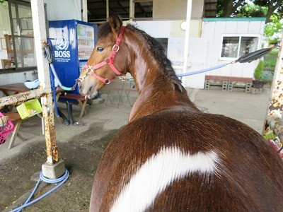 新馬調教 安心して後ろに立てる馬