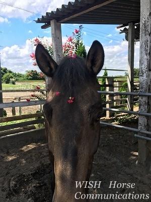 馬の花飾り