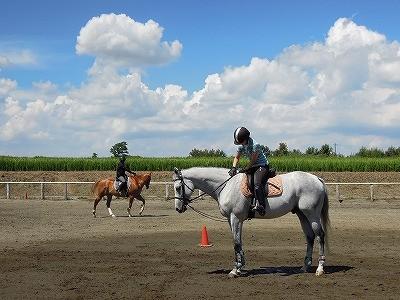 馬は常に学習している