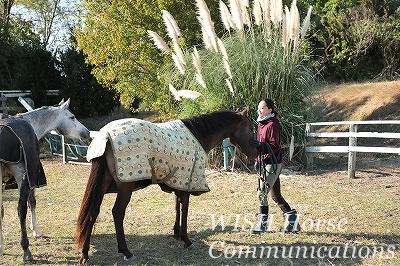 紅葉とのびのび乗馬