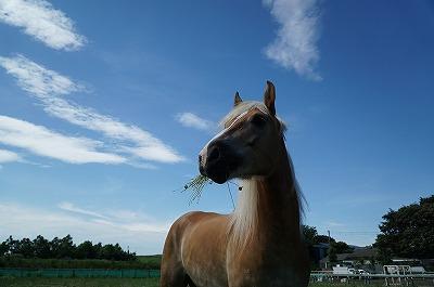 馬は日頃の接し方しだい