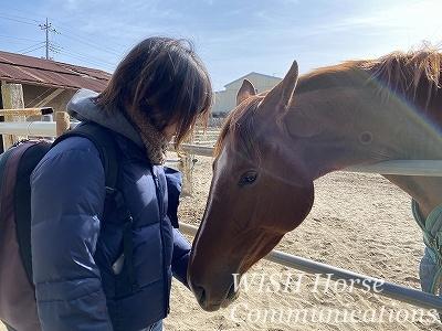馬の心と寄り添う乗馬