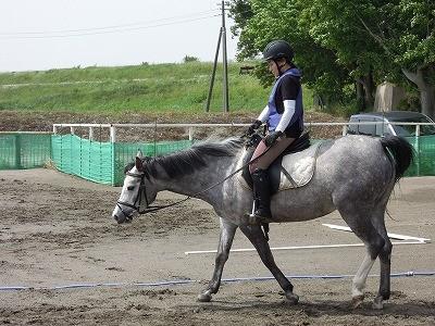 乗馬の基本、知識、練習内容