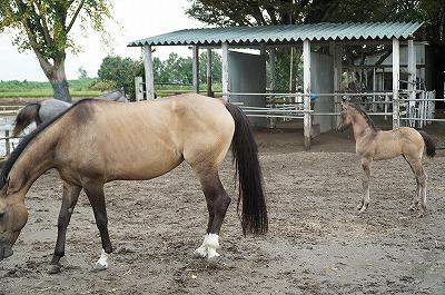 良い馬の立ち姿