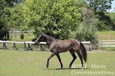 馬も楽しい乗馬