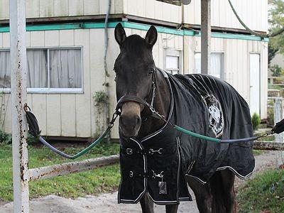 ウィッシュの馬はほんとに可愛いよ