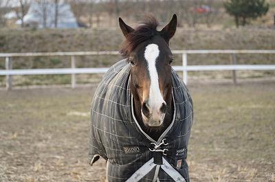 馬を喜ばせたい